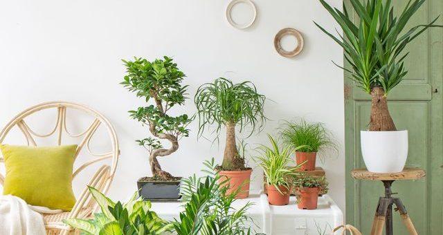 Guide pour choisir vos fleurs d'intérieur