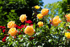 Avoir un beau jardin fleuri toute l'année