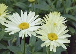 Avoir un beau jardin fleuri toute l\'année – Artfloral ...